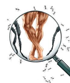 """ANT MAN Debut: 1962 Poderes: La habilidad de encogerse al tamaño de un insecto. """"Si necesito referencias, tengo antiguas revistas de fisicoculturismo-- Hombres como Frank Zane que poseen físicos fuertes pero no se miran exagerados. tomo sus figuras y las traduzco en algo que puedo trabajar en cómic"""" Greg Land ( Artista)"""